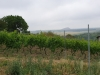 Tage des offenen Weinbergs – 03.08. und 04.08 2019 in der Weinanbauregion Mansfelder Land