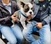 Scheidung: Wer bekommt den Hund?