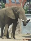 Kritik am Elefantenhaus Halle berechtigt ?! ..... Wir denken nein !!!