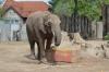 Elefantengeburtstag im Zoo Halle -- Tana wird 14 Jahre alt