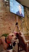 Mit unserem Labradorakel erfolgreich im Achtelfinale ?!!
